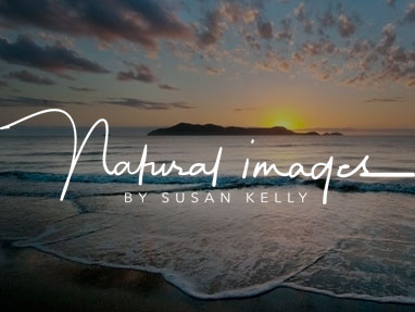 Natural Images by Susan Kelly